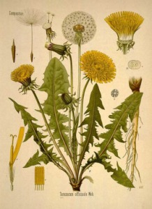 Köhler's Medizinal-Pflanzen in naturgetreuen Abbildungen mit kur